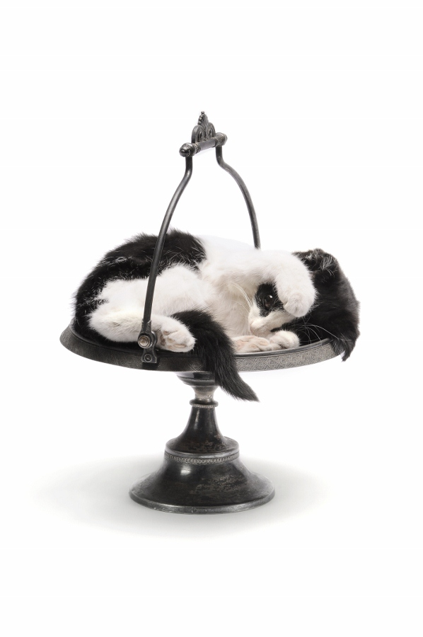 Julia de Ville jewellery, taxidermy