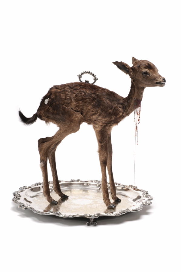 Julia deVille jewelry, taxidermy